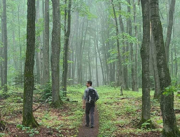 Hiking in the woods as a form of self care