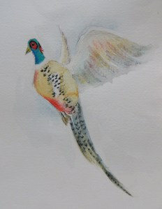 Pheasant Project Image