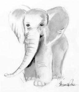 Baby Elephant Project Image