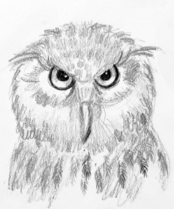 Hoot Owl Project Image
