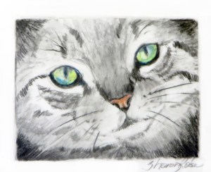 Tabby Cat Project Image