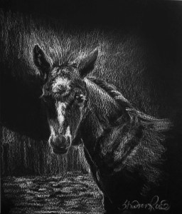 The Foal Project Image
