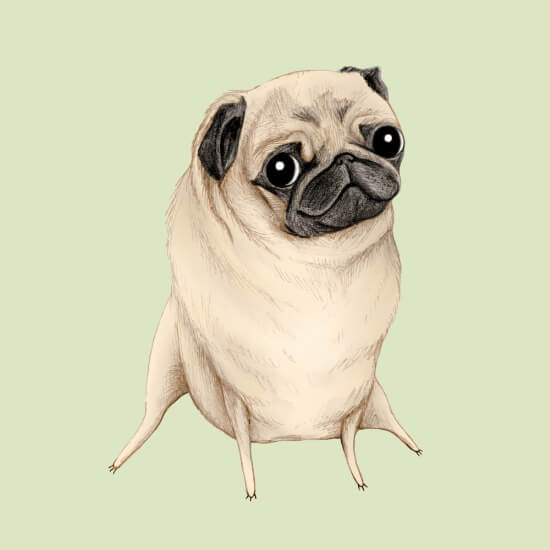 Meet Artists Making Passive Income with Art: Sweet Fawn Pug by Sophie Corrigan