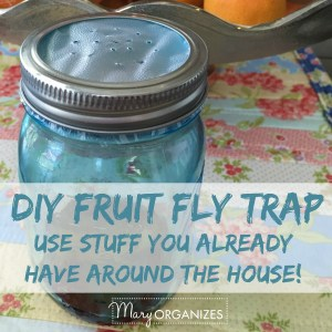 Get Rid Of Fruit Flies For Good