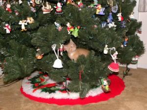 Christmas Tree 70c