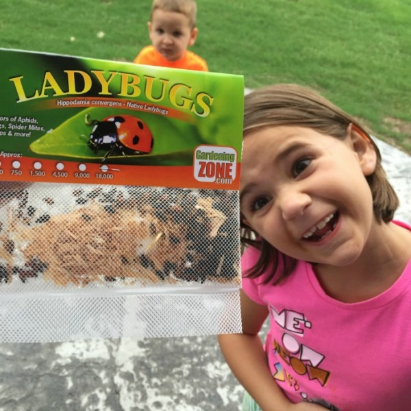 That time I bought Lady Bugs