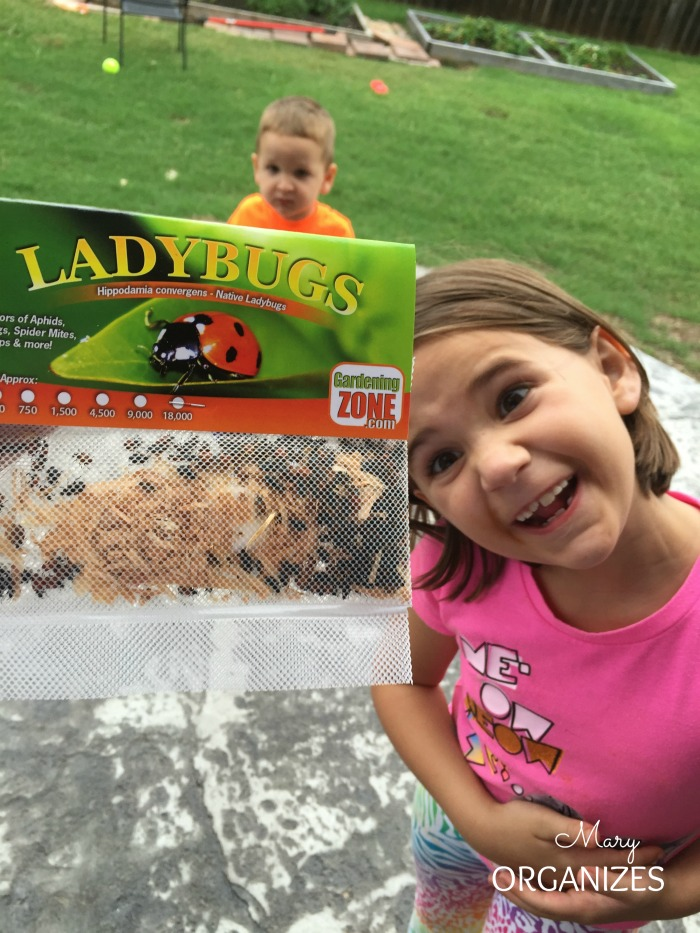 My kids really loved the lady bugs