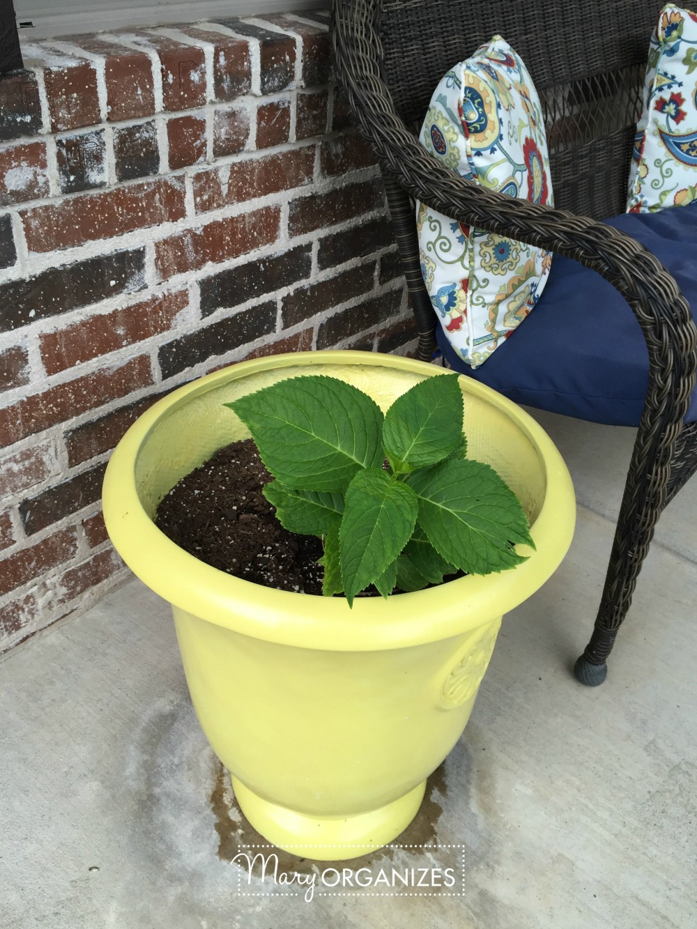 Planter Refresh and Hydrangea Propagation 19