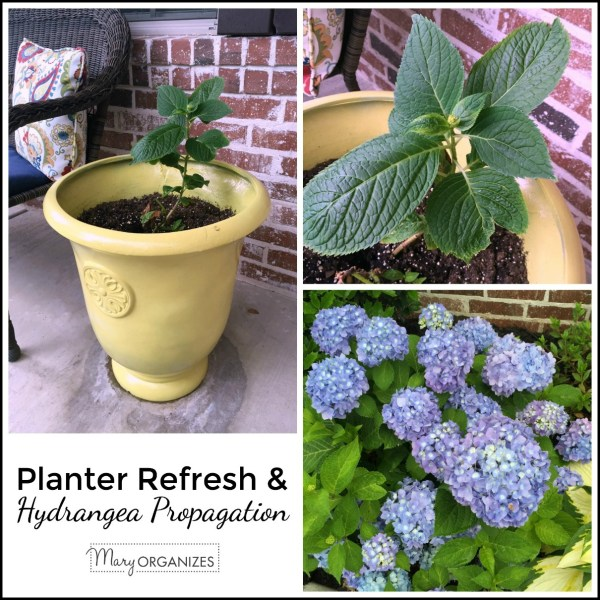 Planters Refresh and Hydrangea Propagation