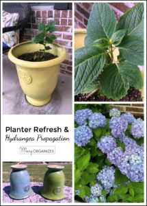 Planter Refresh and Hydrangea Propagation -v pic