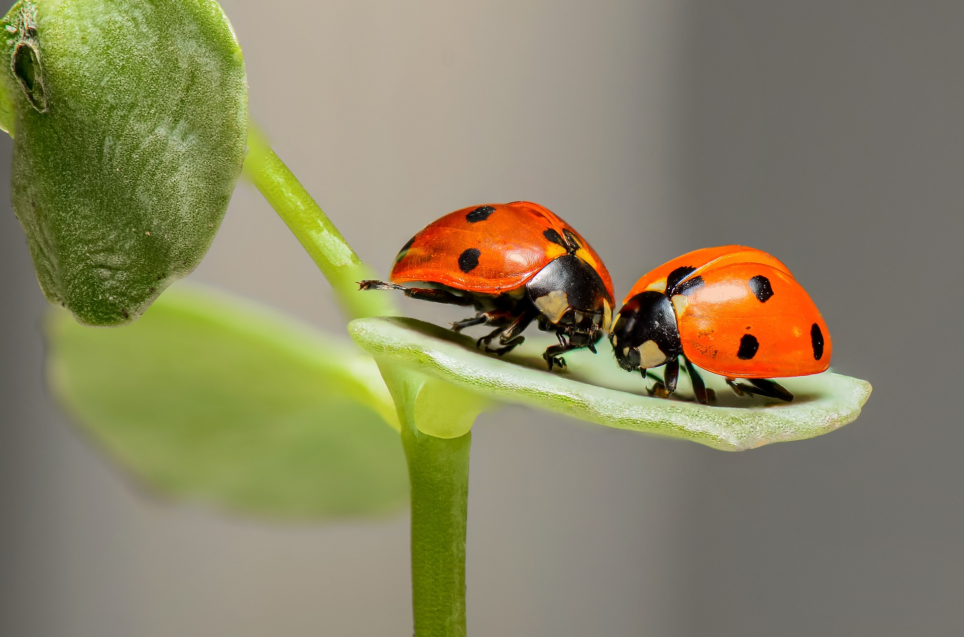 decluttering-as-a-couple-ladybugs