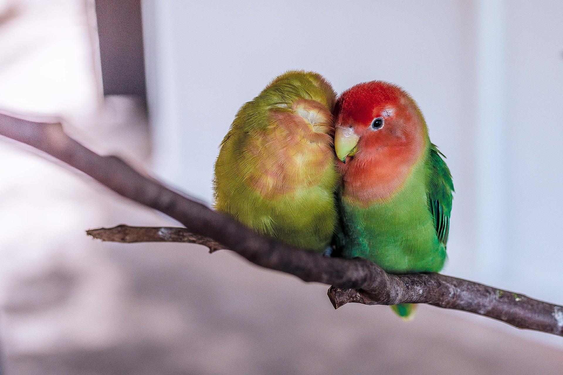 decluttering-as-a-couple-parrots