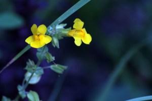 edits garden for fb cIMG_1507