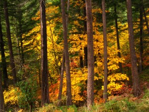 The beauty of the Oregon forest