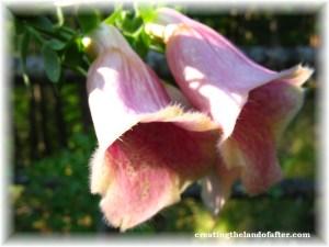 flower in Oregon