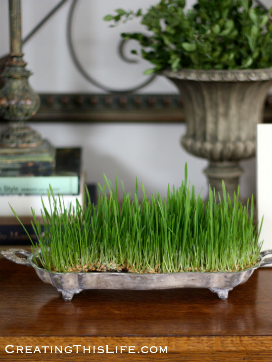 easter-grass-grown-in-silverplate-tray