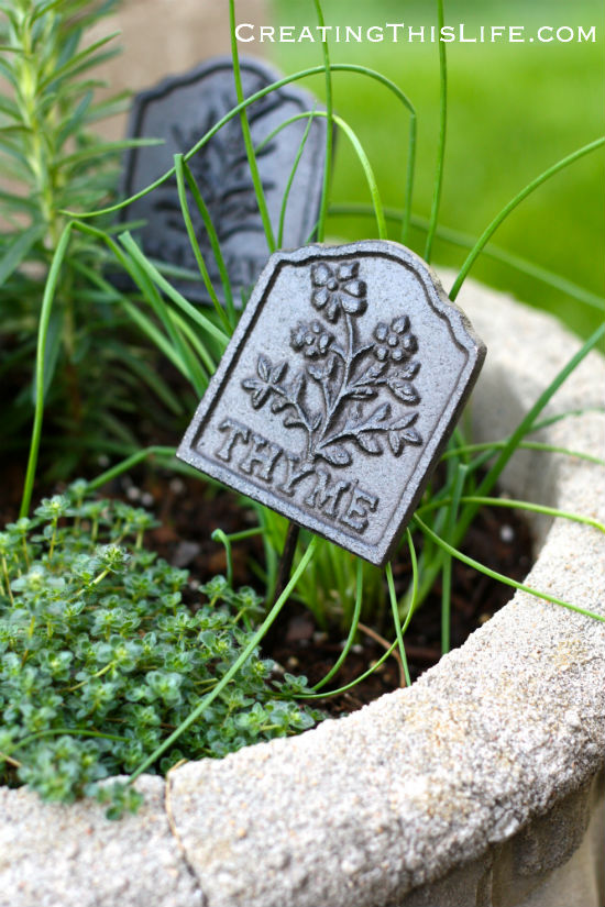 Potted thyme with garden marker at CreatingThisLife.com