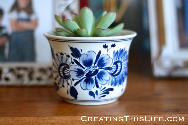 succulent in delft flower pot