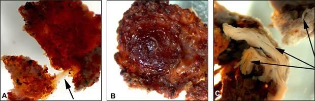 T-Rex tissue sample by Dr Mary Schweitzer