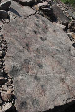 Figure 2. Limestone slab from Poland with fossil footprints. (Piotr Szrek, Uppsala University)