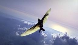 human-soaring