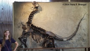 Camarasaurus replica at Dinosaur National Monument