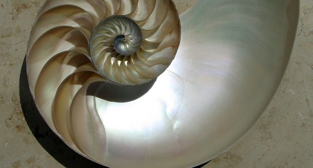 Nautilus Shell with Mother of Pearl, WikiMedia