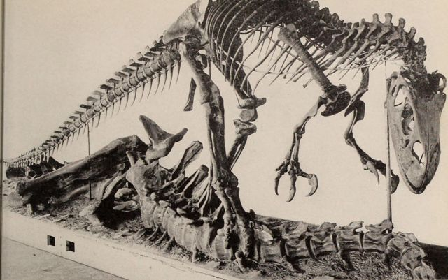 T Rex above carcass bones, Nation History Museum