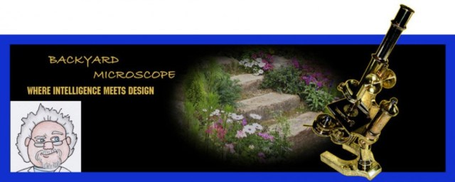 Backyard Microscope, where intelligence meets design