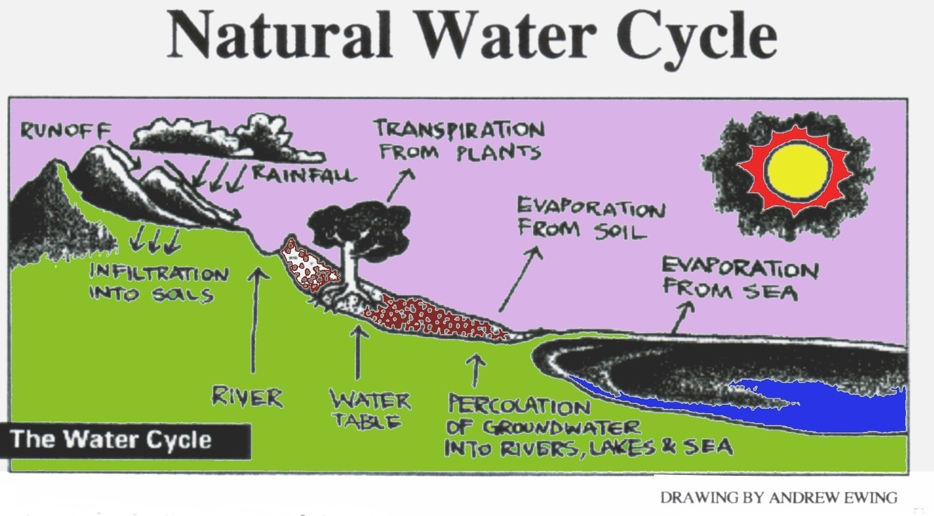Water Cycle Archives