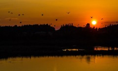 Sunset: Birds above water, WikiCommons