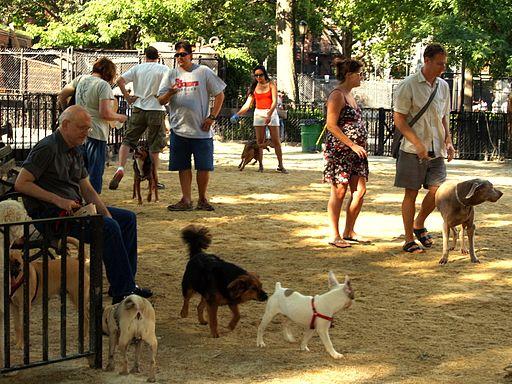 Tompkins_Square_Big_Dog_Run
