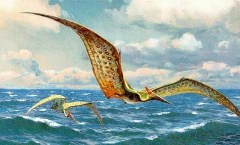 Pteranodon painting: HHarder