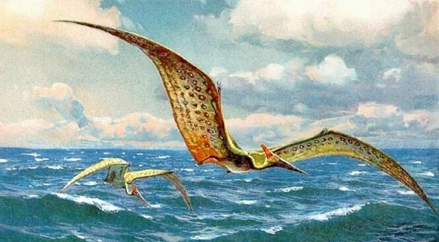 Pteranodon painting: HHarder