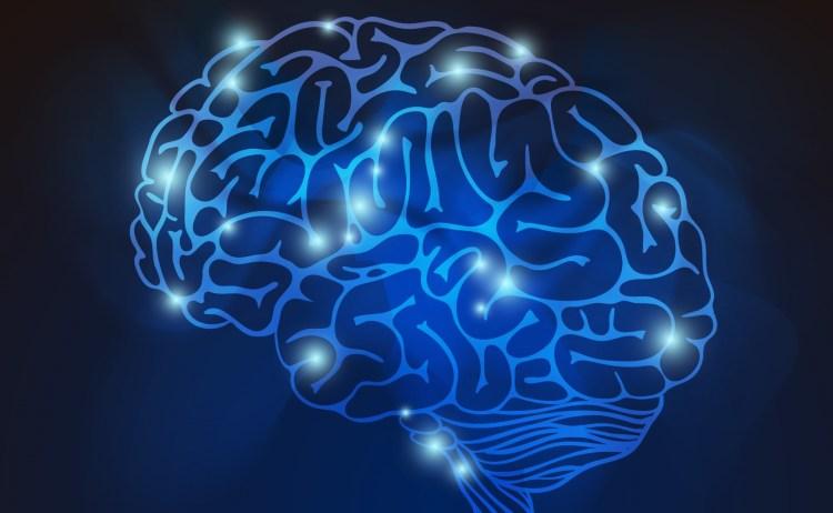 Brain Vector: FreePik
