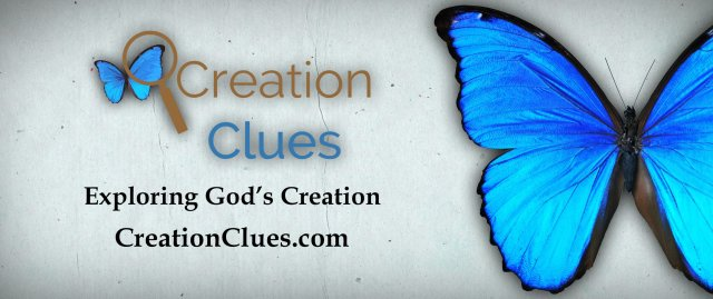 Creation Clues banner
