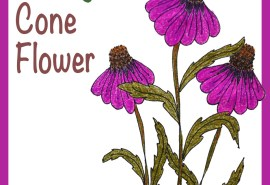 Cone Flower SQUARE