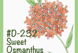 #D-232SweetOsmanthus