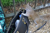 This little guy loved my Anne Klein bag just as much as I did! A zippered waterproof bag was perfect for travelling as it kept my stuff safe and my camera out of harm (water)'s way!