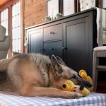 Diy Extra Large Dog Bed Creative Cain Cabin