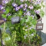 Kitchen Herb Garden In Galvanized Buckets Creative Cain Cabin