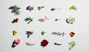 The Flowerpedia
