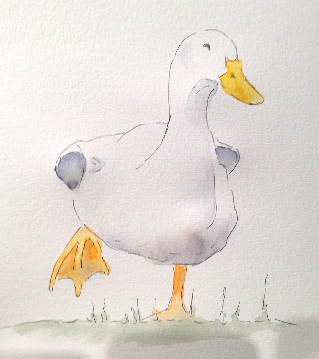 Du siehst ein Aquarell von Dodo Kresse, es stellt eine Ente dar, die ein Füßchen nach oben zieht.