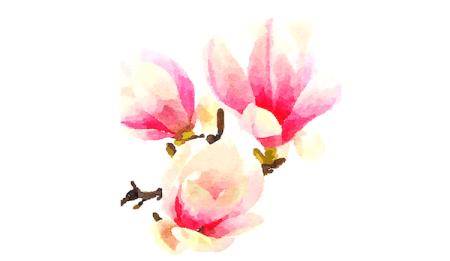 Man sieht das Aquarell einer Magnolie, gemalt von Dodo Kresse für creative club