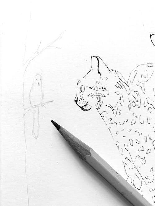 Du siehst wie der Vogel mit einem Bleistift vorgezeichnet wird