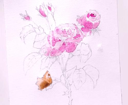 du siehst die farblasuren van dyck braun für den schmetterling und krapplack rosa für die rosen