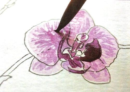 du siehst wie ich violette farblasuren für die Blütenblätter der Orchidee anlege
