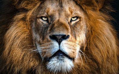 Cómo gestionar el estrés cuando no te persiga un león