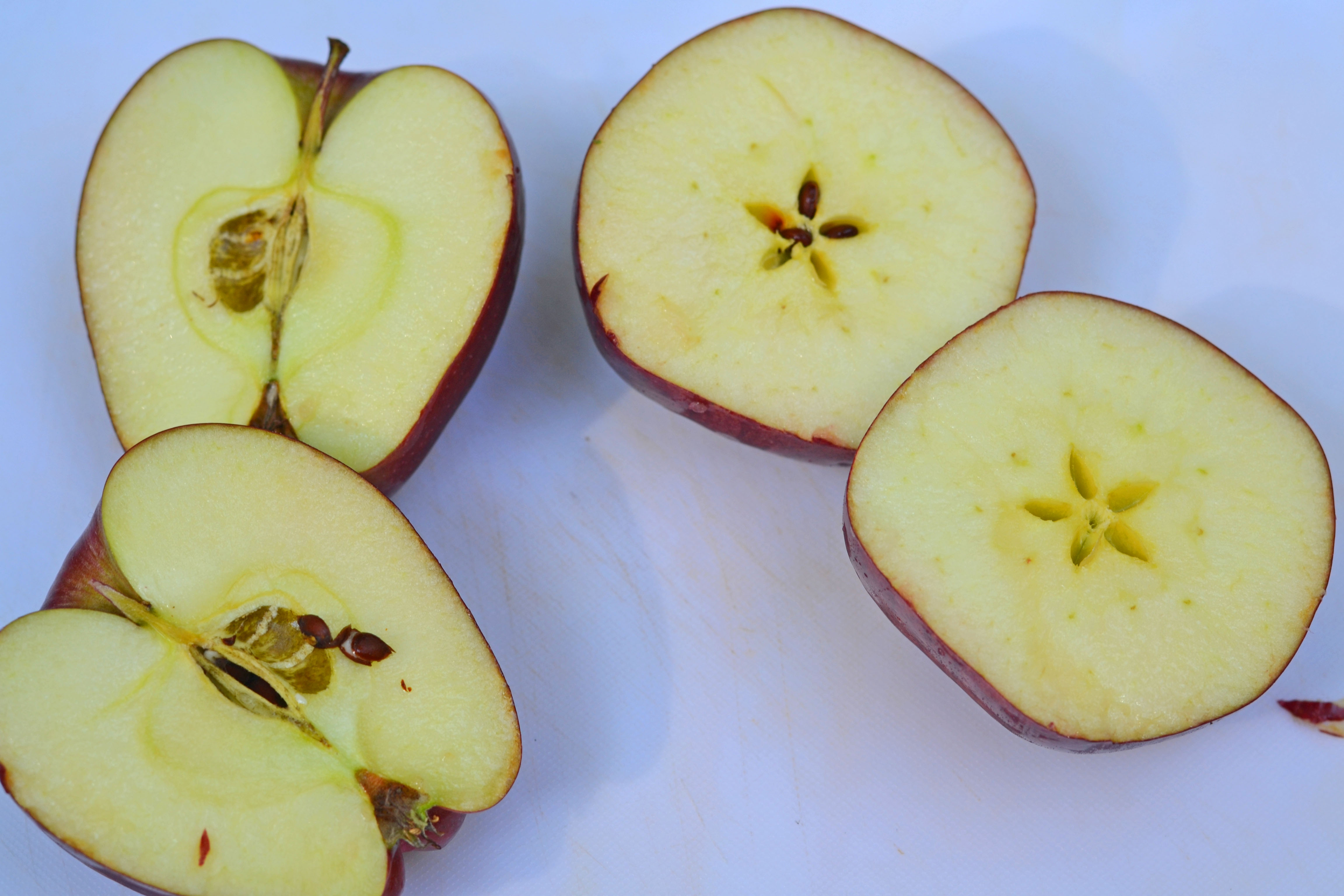 An Apple Extravaganza Activities With Apples