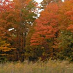 Wordless Wednesday: The Colours of Autumn